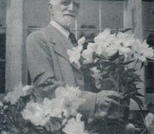 A.P. Saunders' peonies