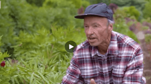 "Ron Boekel ""My Gardening Path"" – Gardening Australia"