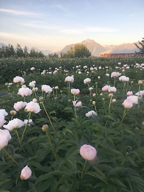 Wasilla Lights Farm, Wasilla, Alaska